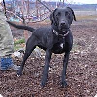 Adopt A Pet :: Scottie - Yreka, CA