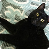 Adopt A Pet :: Anna - Austintown, OH