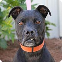 Adopt A Pet :: Paisley - Brunswick, GA