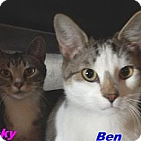 Adopt A Pet :: Ben & Becky - Hawk Springs, WY