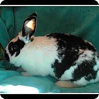 Adopt A Pet :: Oriana - Williston, FL