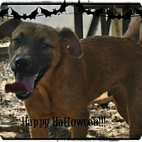 Adopt A Pet :: Radar meet me 11/6 - East Hartford, CT