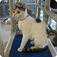 Adopt A Pet :: Mopsy - Geneseo, IL