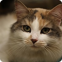 Adopt A Pet :: Ariel - Richmond, VA