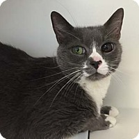 Adopt A Pet :: Buxton - Merrifield, VA