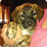 Adopt A Pet :: Teddy - Charlestown, RI