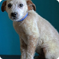 Adopt A Pet :: Bumper - Waldorf, MD