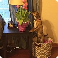 Adopt A Pet :: Cam - Hanover, PA