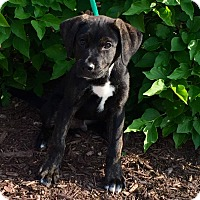 Adopt A Pet :: Sabor - Oswego, IL