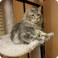 Adopt A Pet :: Lira - McKinney, TX