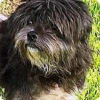 Adopt A Pet :: Trinket - Oswego, IL