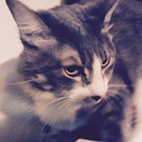 Adopt A Pet :: Cloud - Houston, TX