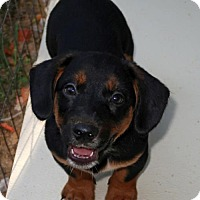 Adopt A Pet :: Felix - Burbank, OH