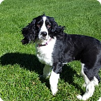 Adopt A Pet :: Missie - Bend, OR