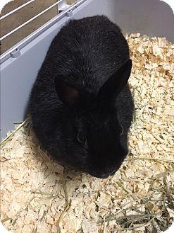 Dwarf Mix for adoption in Paramus, New Jersey - Bean