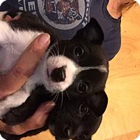 Adopt A Pet :: Aaron and Arby - Memphis, MI