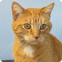 Adopt A Pet :: Butters - Northfield, MN