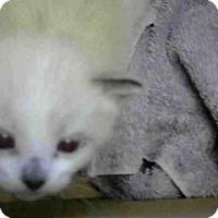 Adopt A Pet :: A697971 - Sacramento, CA