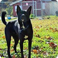 Adopt A Pet :: Bingo - Cincinnati, OH