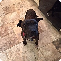 Adopt A Pet :: Libby - Rockaway, NJ