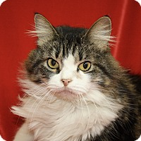 Adopt A Pet :: Betty Boop - Jackson, MI