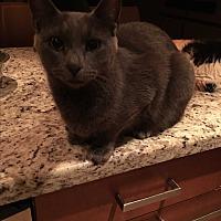 Adopt A Pet :: Tonga - Lauderhill, FL