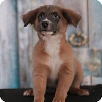 Adopt A Pet :: Marley - Parsippany, NJ