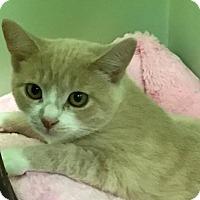 Adopt A Pet :: Jenny - Auburn, CA