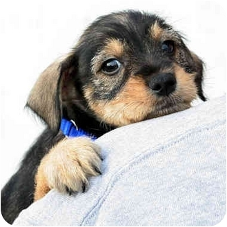 marina del rey puppy dog training