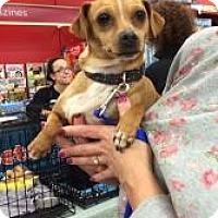 Adopt A Pet :: Baby Girl - Tucson, AZ