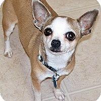 Adopt A Pet :: GO-GO - AUSTIN, TX
