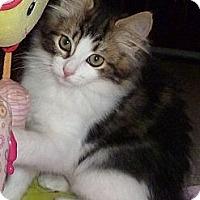 Adopt A Pet :: Denise - Portland, OR