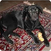 Adopt A Pet :: Lula - Pearland, TX