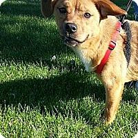 Adopt A Pet :: Holly - Silver Lake, WI