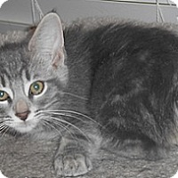 Adopt A Pet :: Manolo - North Highlands, CA
