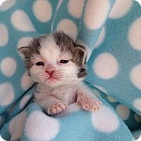 Adopt A Pet :: Angel - Union, KY