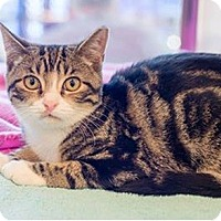 Adopt A Pet :: Kally - Fredericksburg, VA
