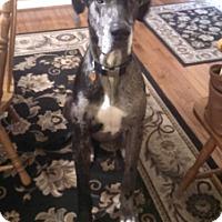 Adopt A Pet :: Austin - Hanover, MD