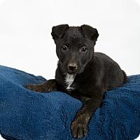 Adopt A Pet :: Shasta - Nuevo, CA