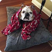Adopt A Pet :: Annie - Park Ridge, IL