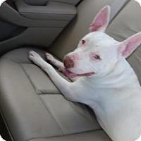 Adopt A Pet :: Loco (courtesy listing) - West Palm Beach, FL