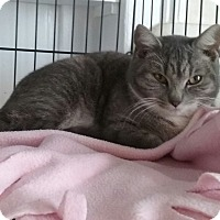 Adopt A Pet :: Minnie - Danbury, CT