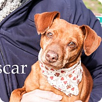 Adopt A Pet :: Oscar - Hamilton, MT
