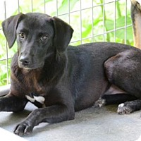 Adopt A Pet :: Mollie Mae - Willingboro, NJ