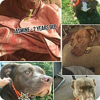 Adopt A Pet :: Jasmine - Portage, IN