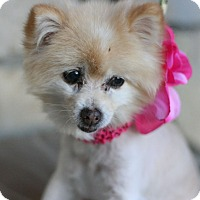 Adopt A Pet :: Laika - Canoga Park, CA