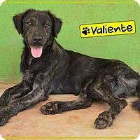 Adopt A Pet :: Valiente - St. Catharines, ON