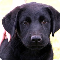 Adopt A Pet :: Dexter~meet me~ - Glastonbury, CT