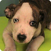 Adopt A Pet :: Junior - Maynardville, TN