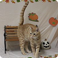 Adopt A Pet :: Mushu - Stockton, CA
